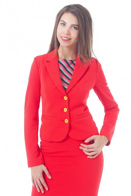 Купить жакет коралловый трикотажный Деловая женская одежда