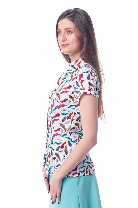 Купить блузку летнюю в перышки Деловая женская одежда фото